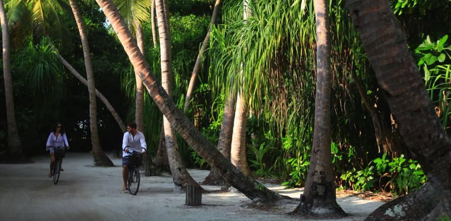 Cycle trails through the lush vegetation
