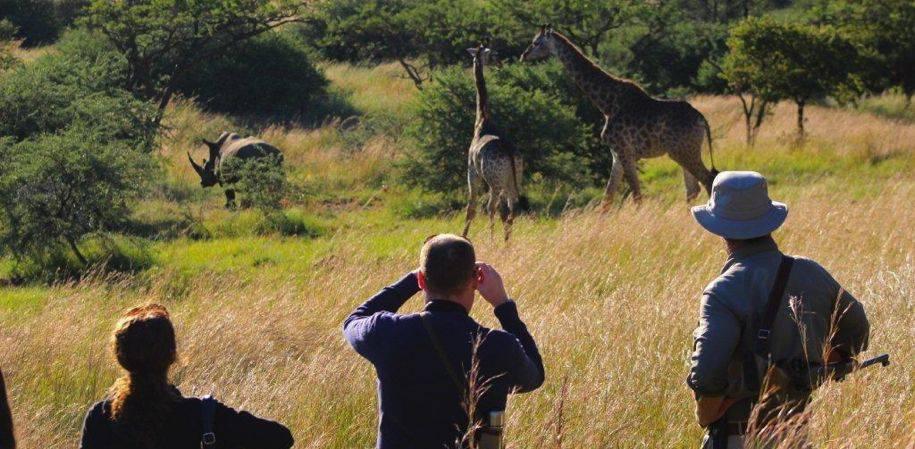 Rhino tracking with Simon
