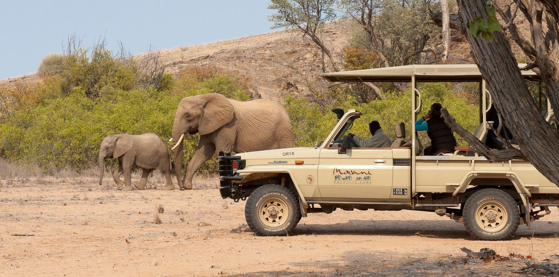 Join a Mowani safari in search of the elusive desert elephant