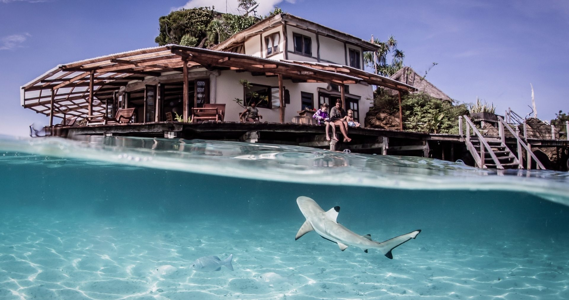 Baby sharks often visit the safety of the lagoon (Photo Credit Shawn Heinrichs)