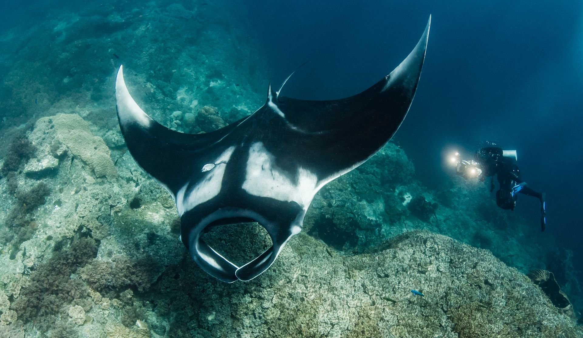 Meet the Mantas (Photo Credit Shawn Heinrichs)