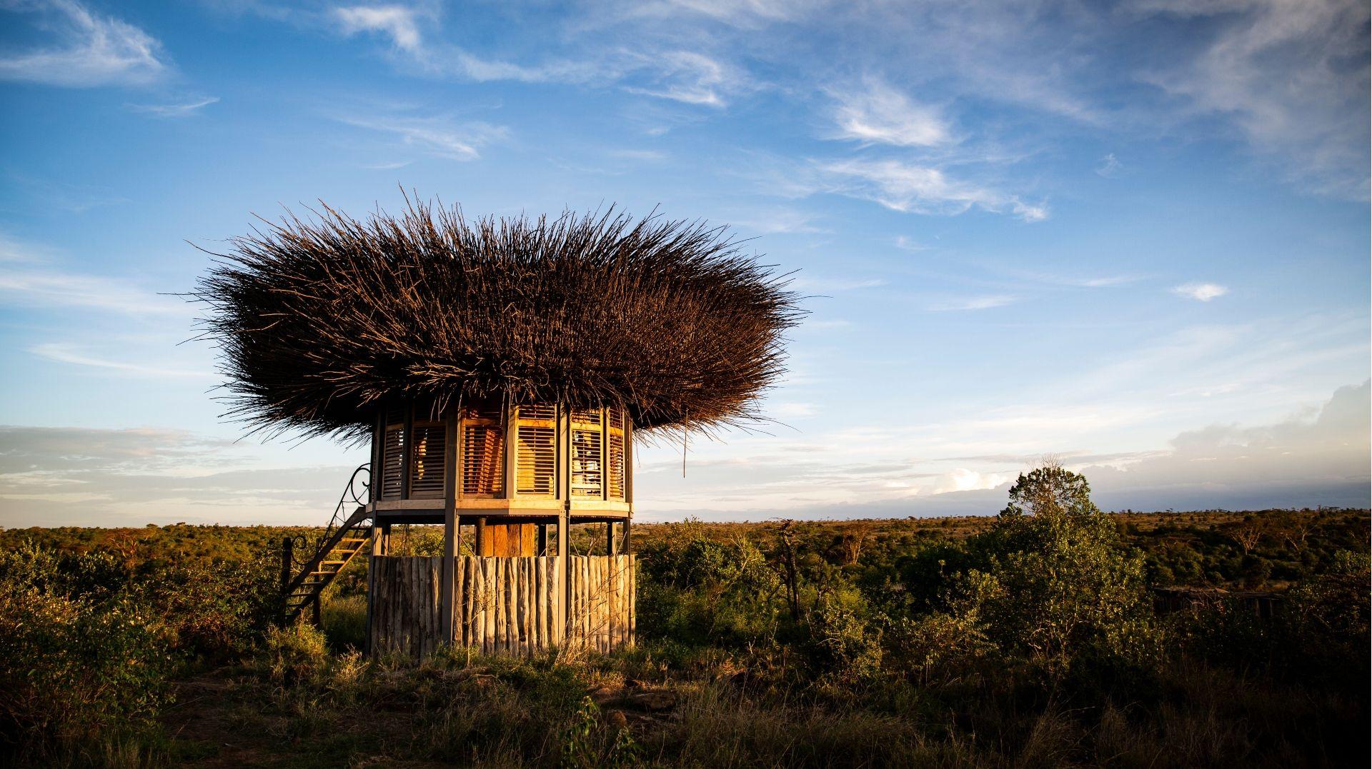 Nay Palad Bird's nest