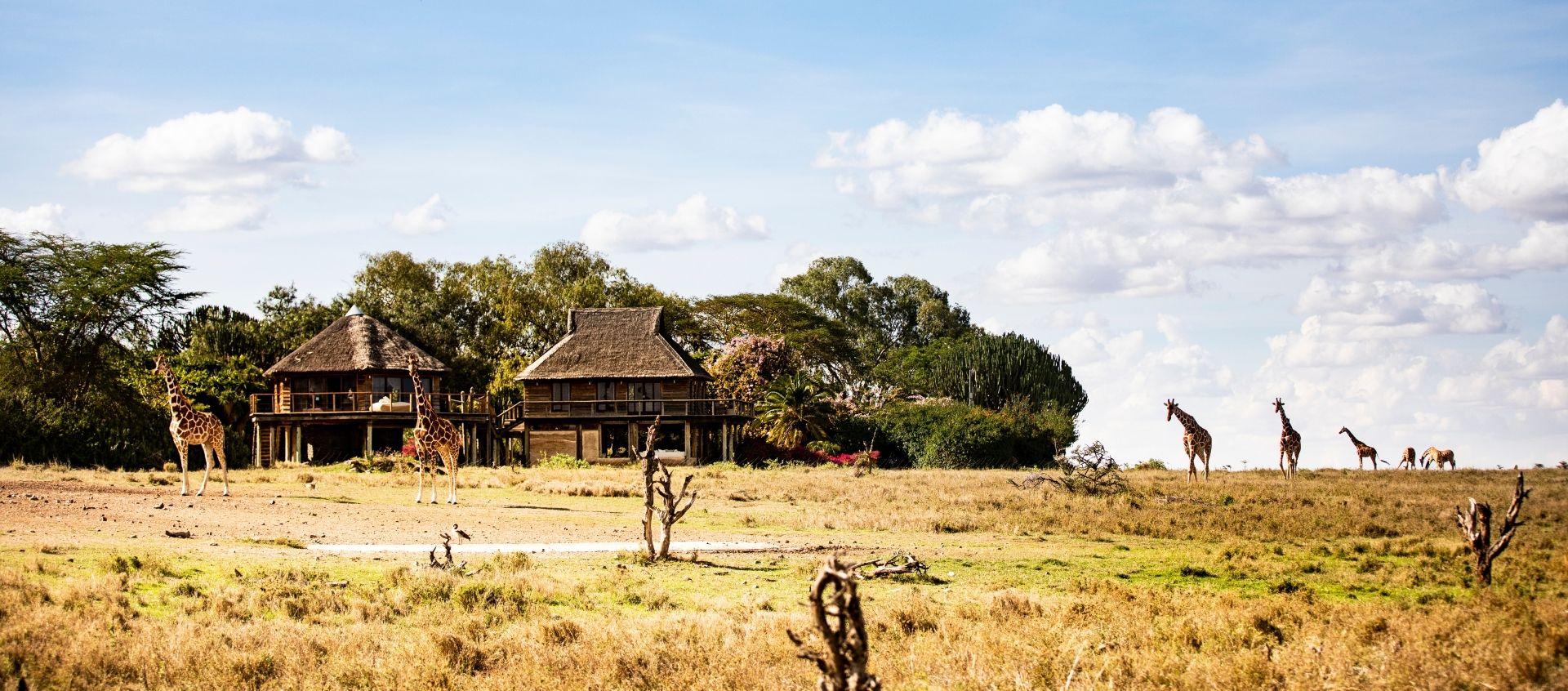 Villa Segera Giraffes