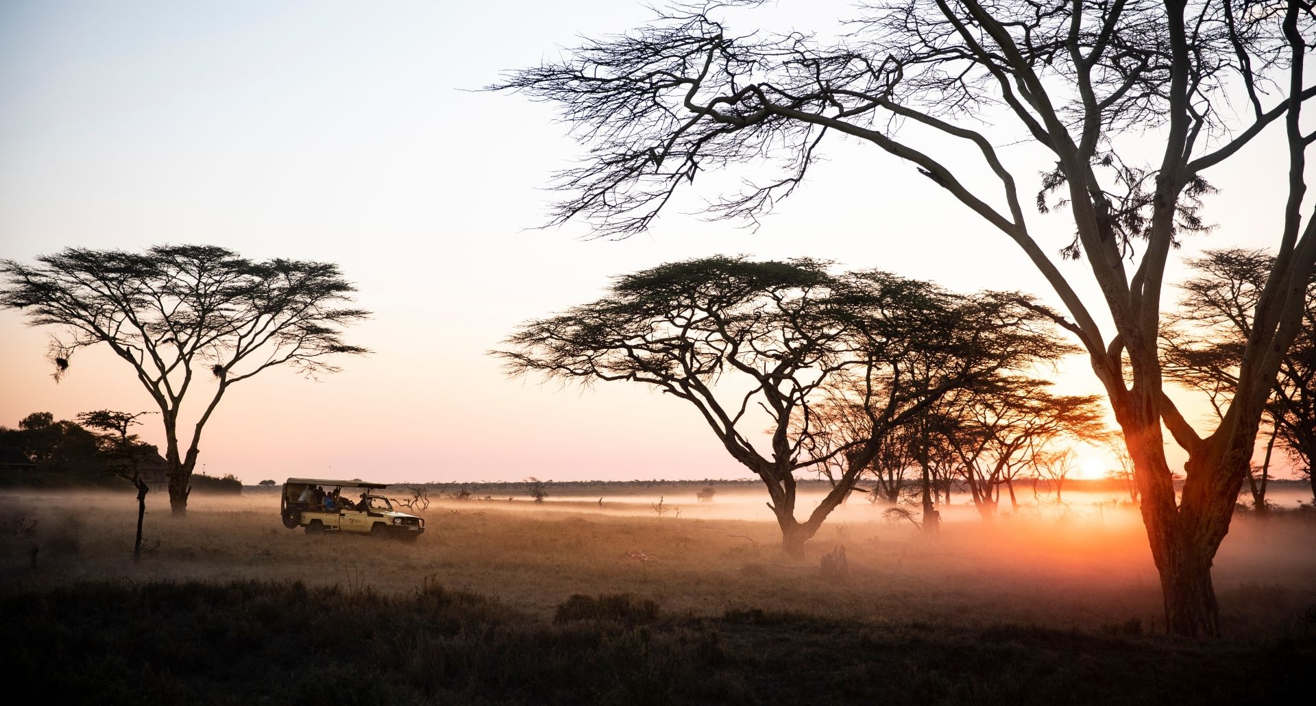 Dawn game drive in the mist