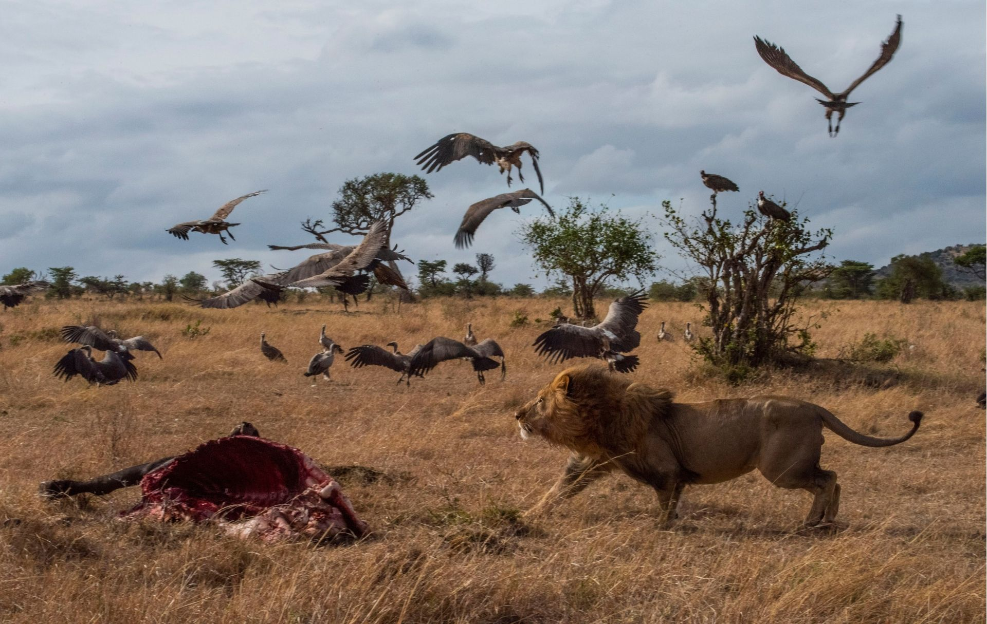 Chasing those pesky vultures