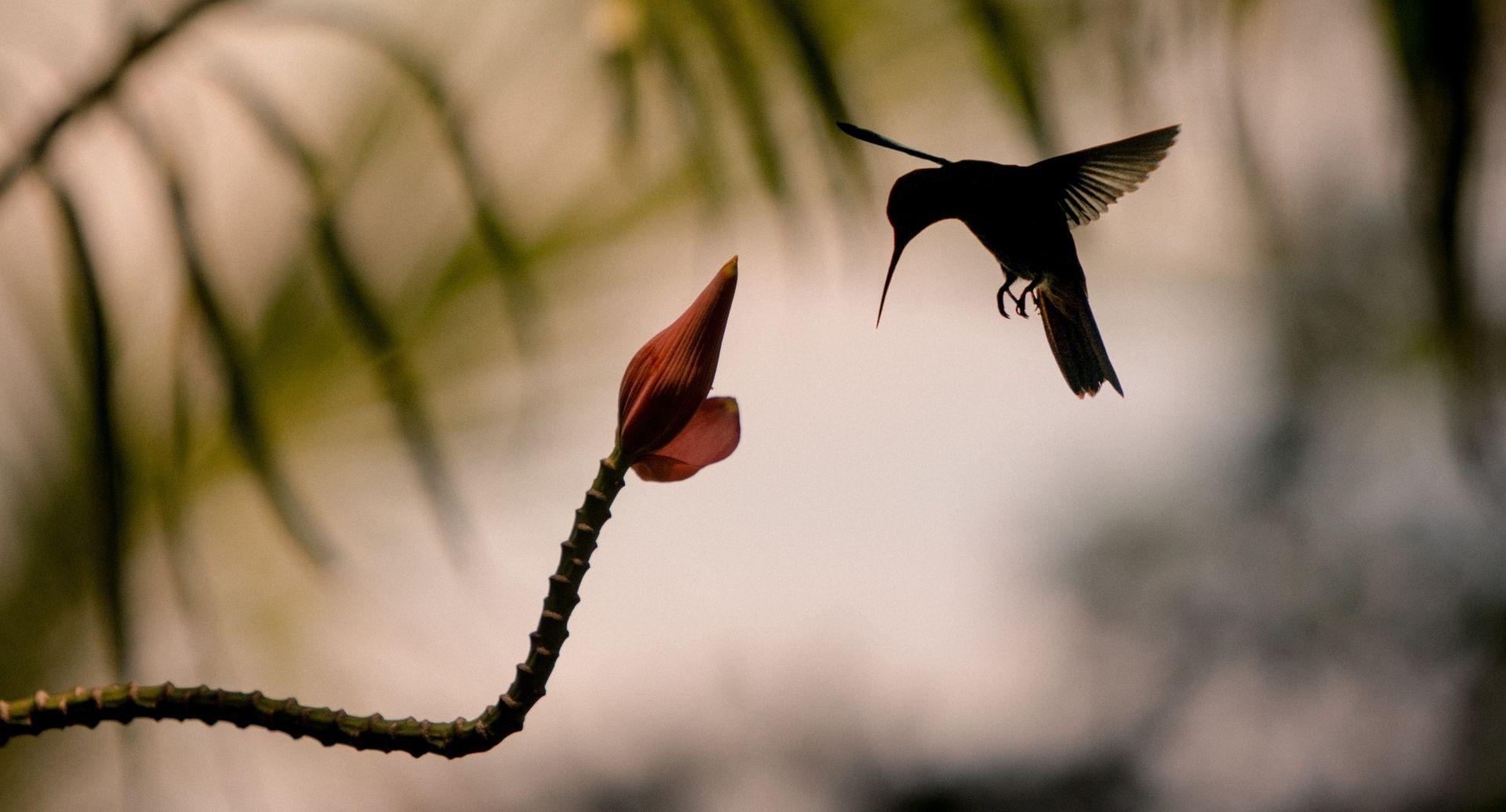 Move_Mountains_Luxury_Holidays_Sustainable_Americas_Panama_Islas_Secas_wildlife_hummingbird