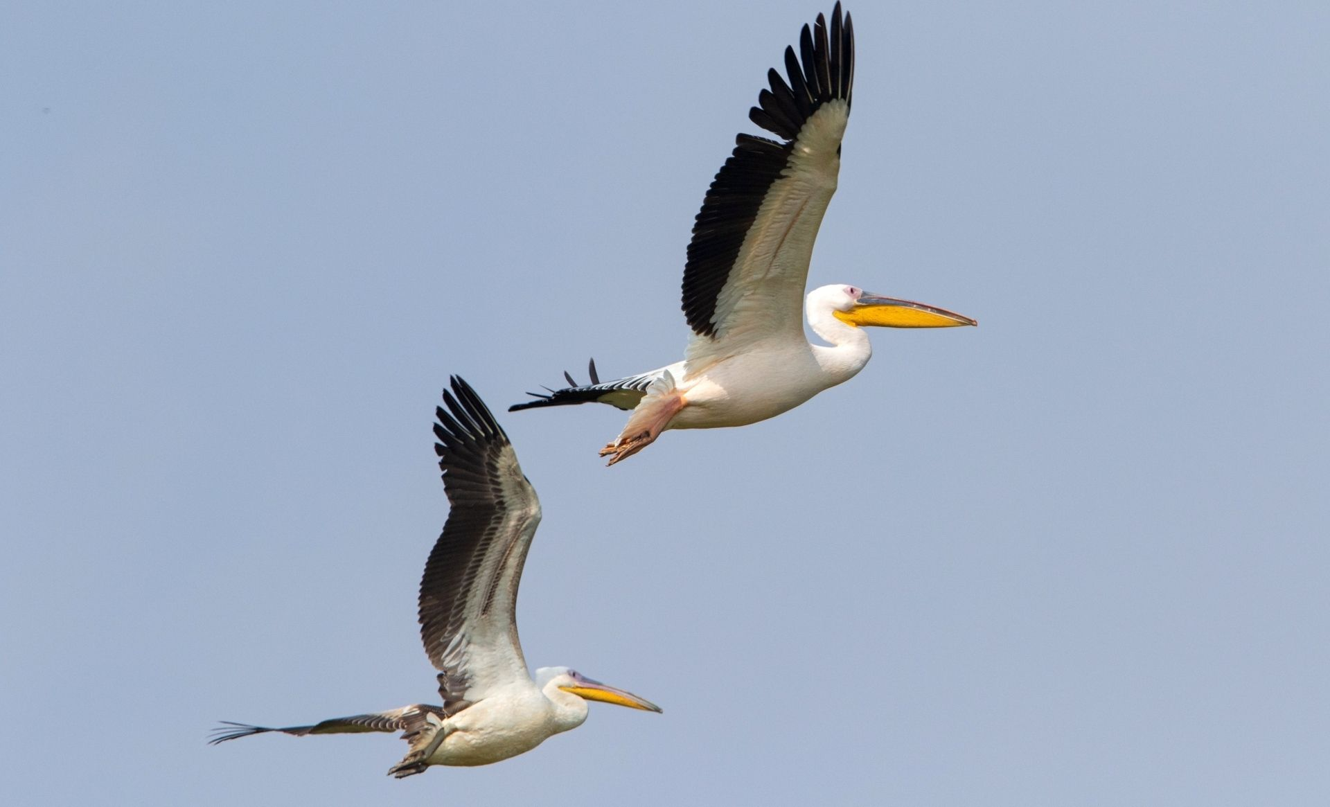 RAAS Chhatrasagar – a wonderful place to see wildlife