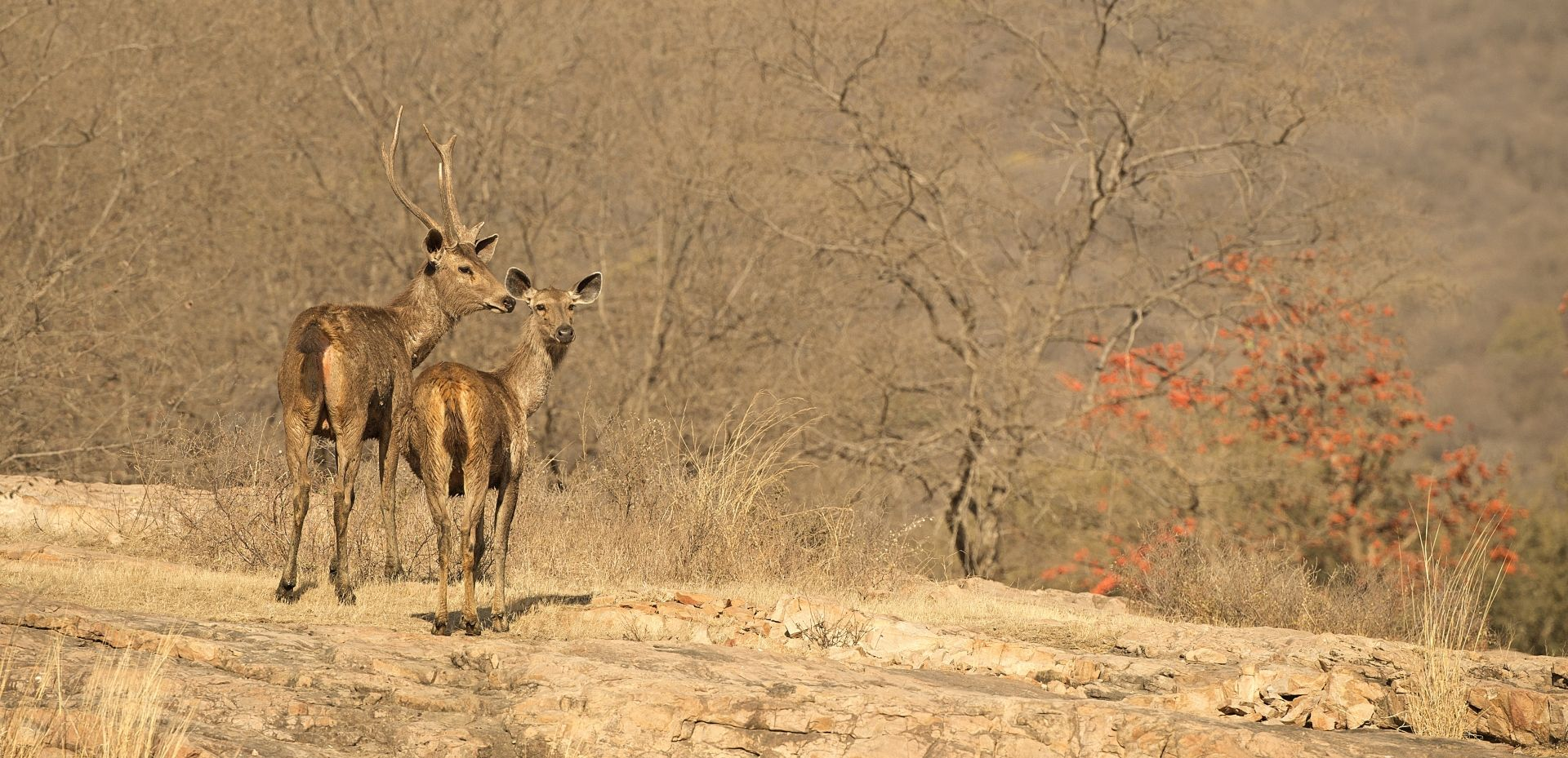 SUJAN Sher Bagh – Deer