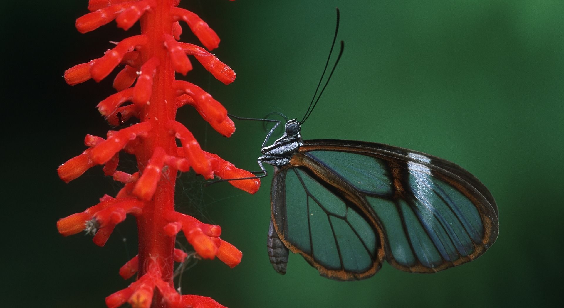 A discovery of even the most delicate of fauna (Photo Credit: Thomas Marrent)
