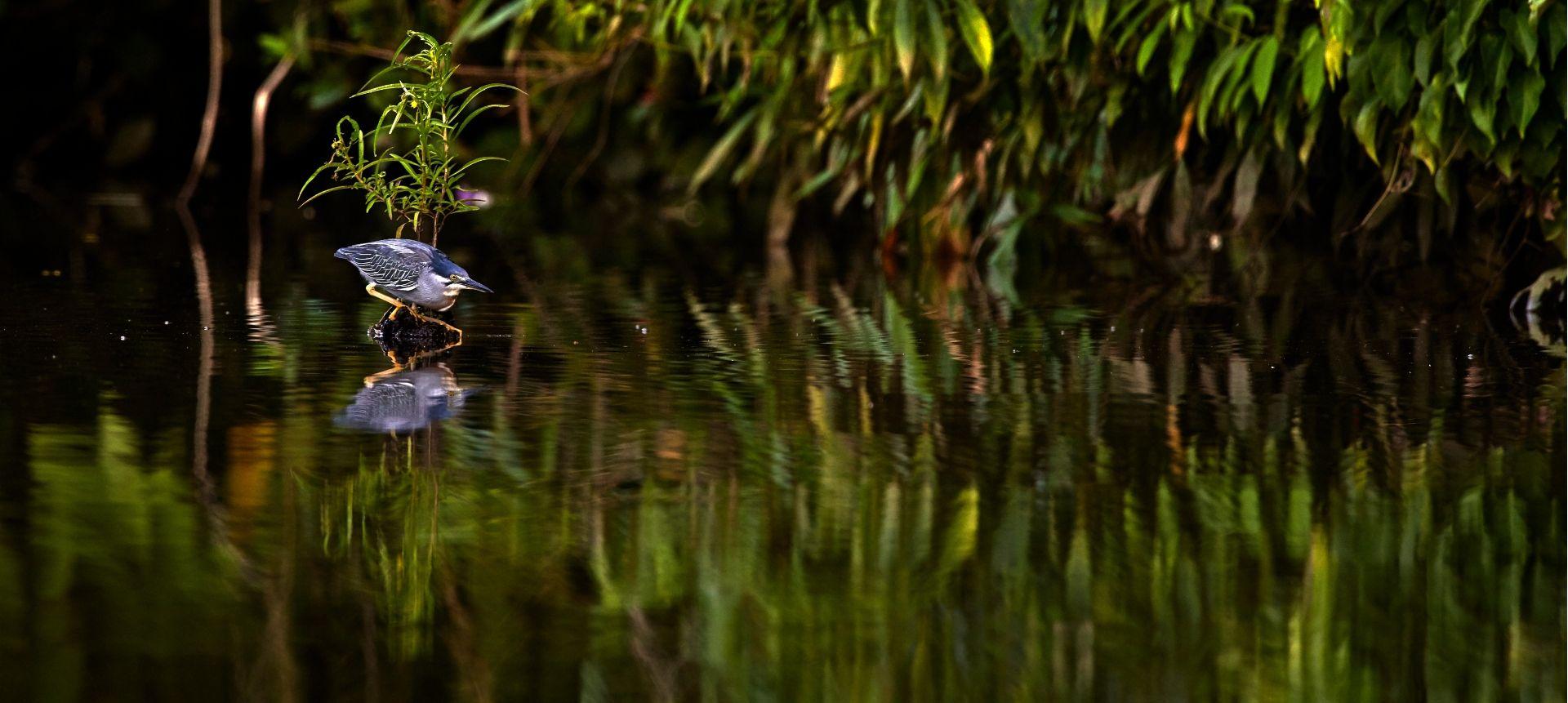Fishing in the Amazon – (Photo Credit: Paul Bertner)